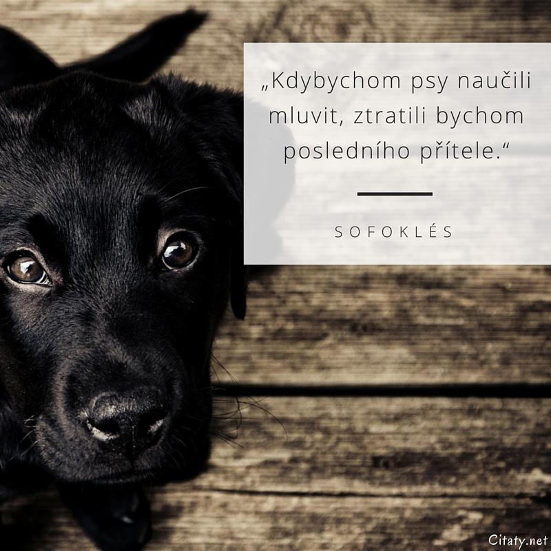 Kdybychom psy naučili mluvit, ztratili bychom posledního přítele. -  Sofoklés